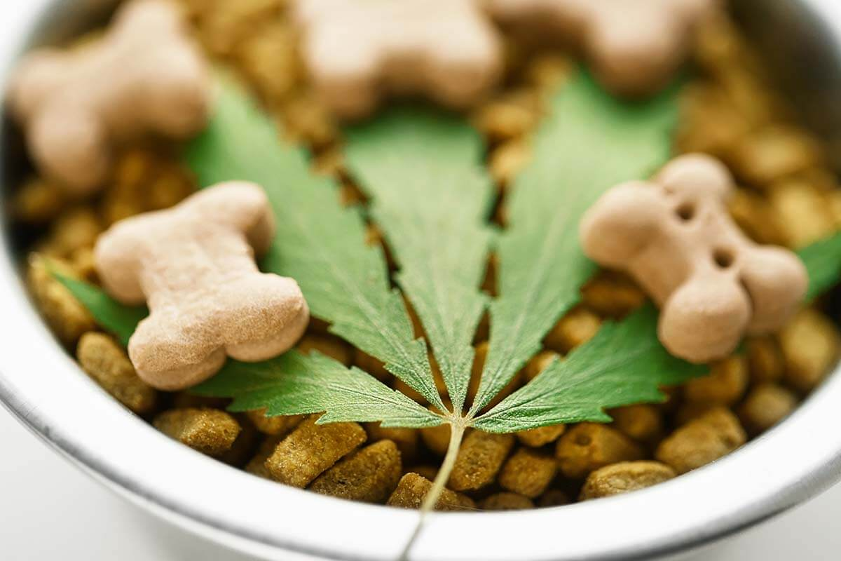 Hemp leaf placed on dog food that contains CBD pet treats.